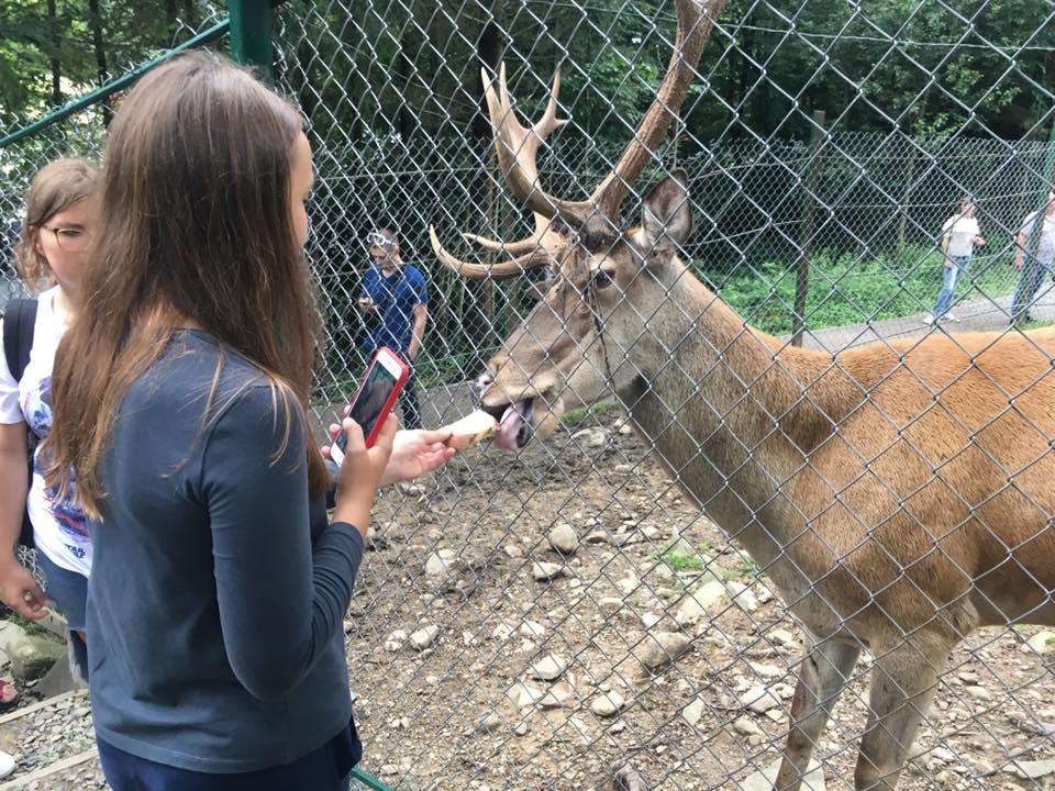 девочка кормит оленя